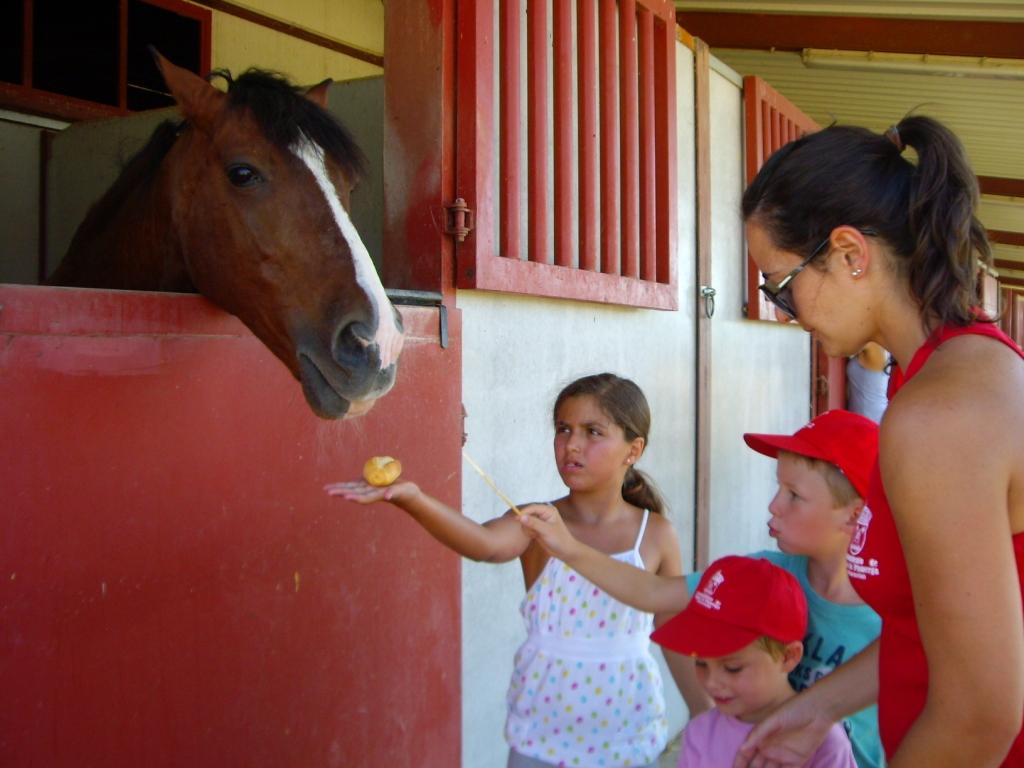 Con-VIVENCIA 2013 en los caballos